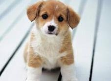 Hasil gambar untuk Cara merawat anjing