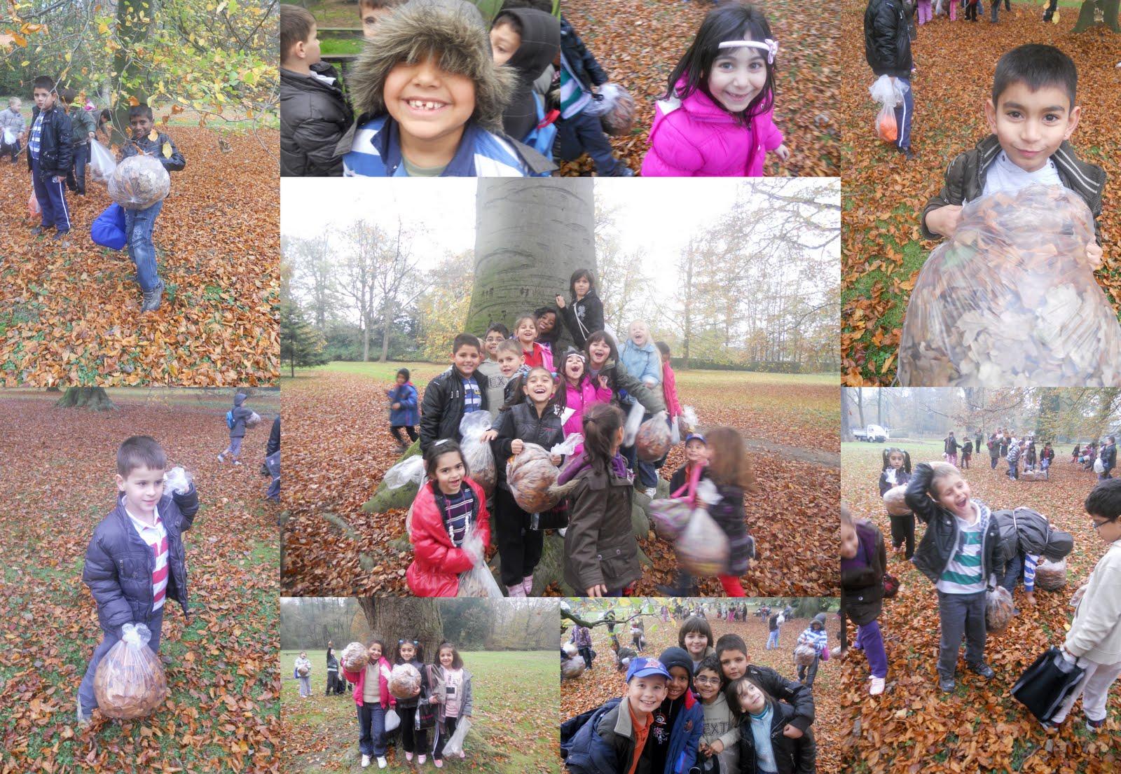 Welkom bij 1/2 C !: Herfstwandeling in Maaltepark