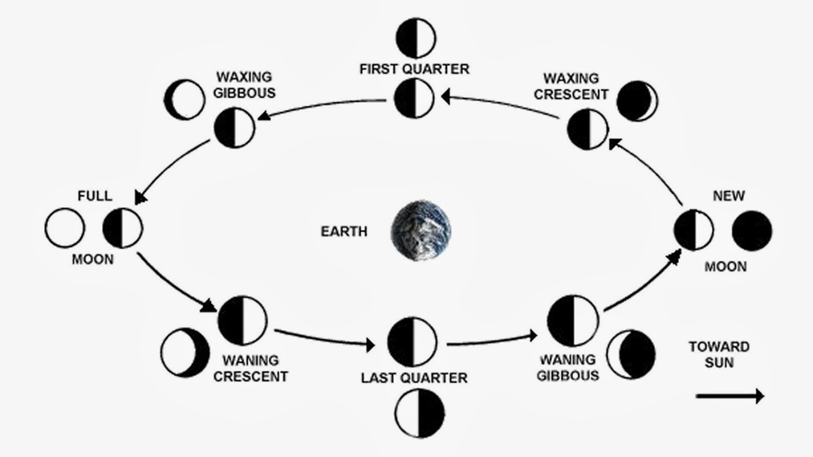 lunar phases essay Phases of the moon  astronomers recognize three basic types of lunar eclipses: 1 penumbral lunar eclipse the moon passes through earth's penumbral shadow.