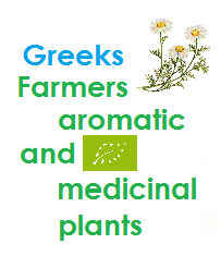 GReek Farmers with Organic Aromatic and Medicinal Plants