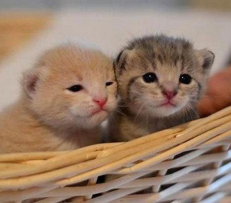 Cara Merawat Anak Kucing Tanpa Induk Permathic Blog