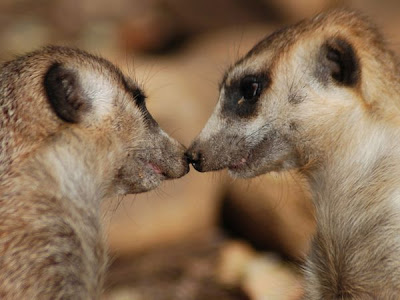 Animal Love Pair Pictures 10
