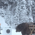 Huge Bear Surprises Crew On Photo Shoot! Check Out What Happened!
