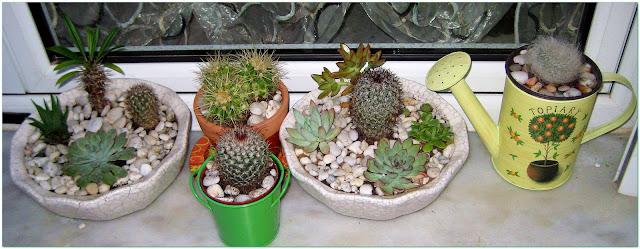 Nežno zeleni, minijaturni, postavljeni u interesantan aranžman u kojem se igra svetlost, zelenilo biljke i prefinjeni cvetovi tvore prijatnu atmosferu unoseći duh i miris tropskih predela u naše domove.