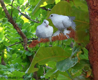 white pigeons sitting on tree