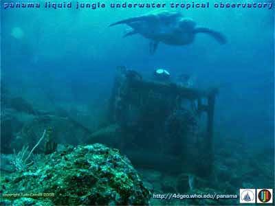 Live Underwater Camera Cayman Islands