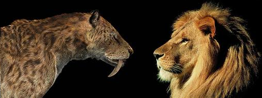 African Lion vs Grizzly Bear Fight  Compare Animal
