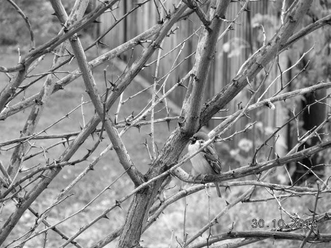 Foto-provocare in alb-negru