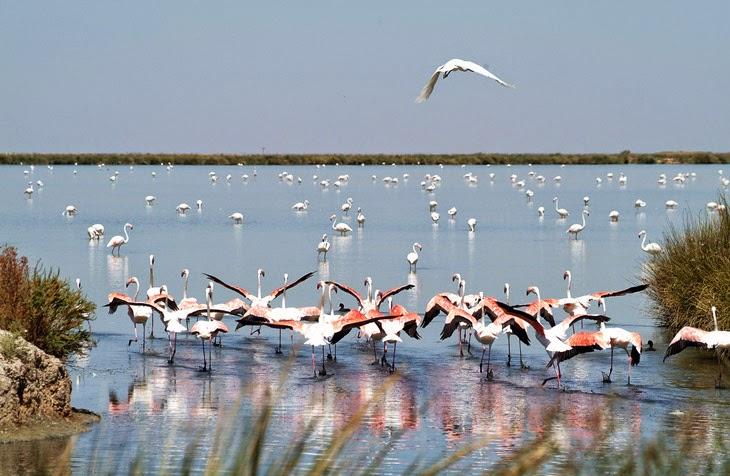 Segundo Fin de Semana de Mayo, Día Mundial de las Aves Migratorias.