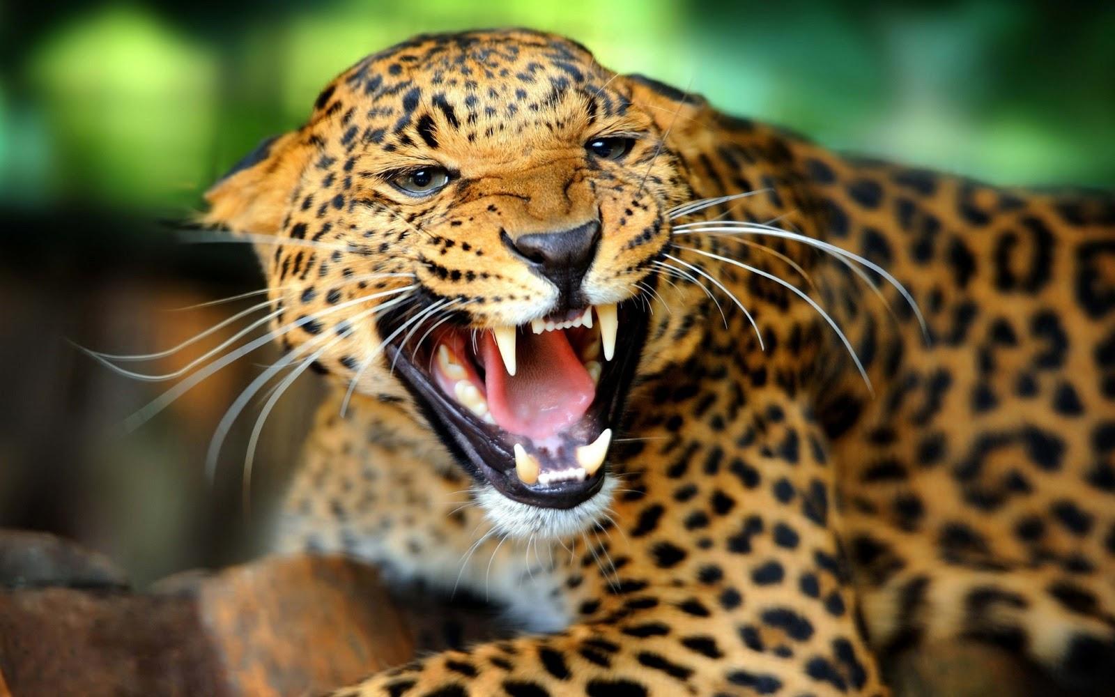 Animales Salvajes En Peligro De Extincion