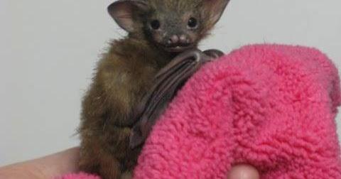 OOAK BABY BUMBLEBEE BAT
