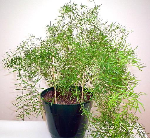 Топ 15 Комнатных растений растущих в тени с фото