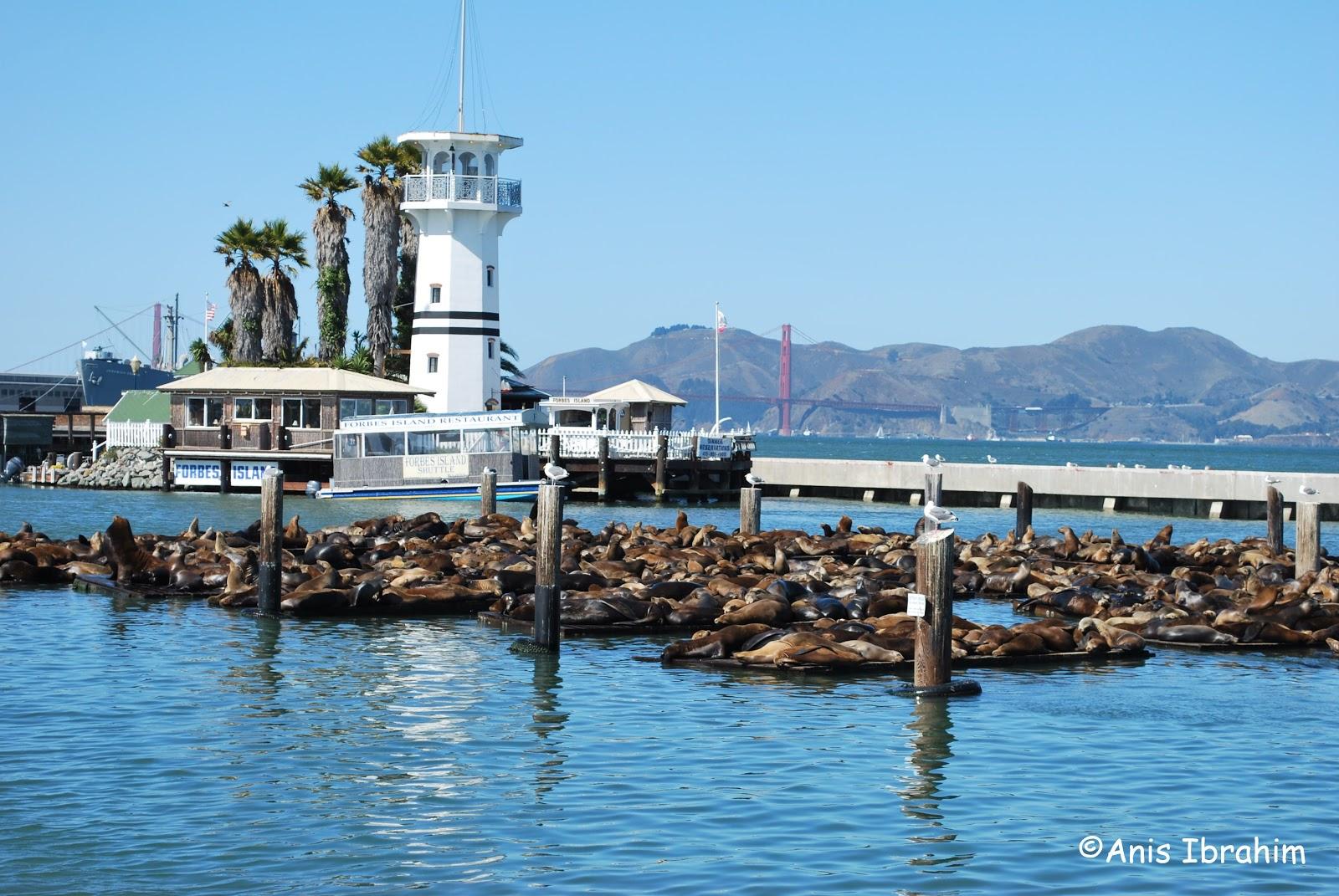 Fisherman s wharf san francisco five foot traveller for San francisco fishing