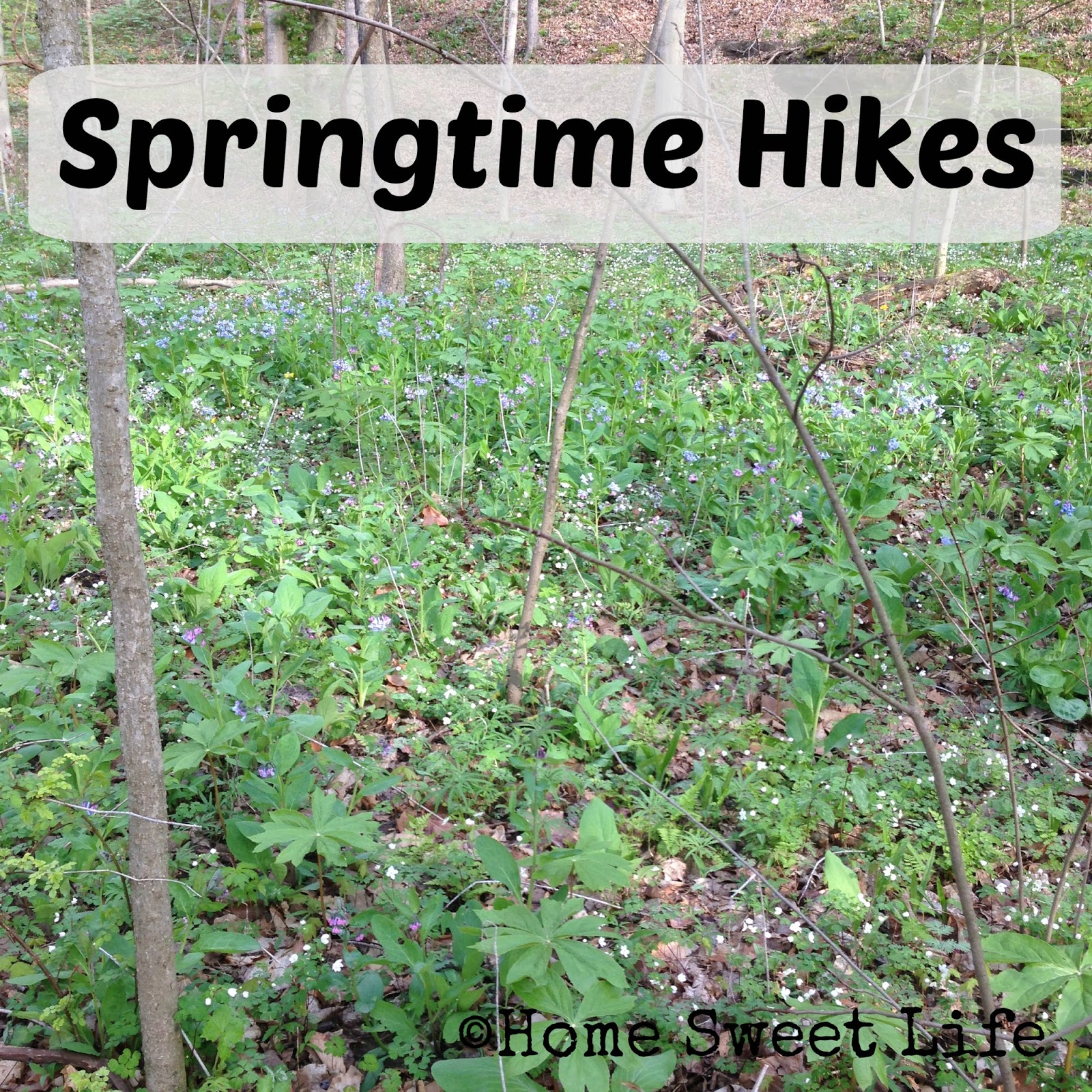 Springtime hikes, wildflowers
