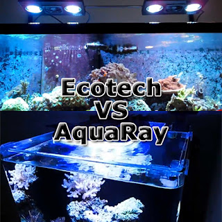 Comparison between EcoTech Radion and AquaRay LED Lighting