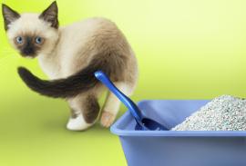 Отучить кота гадить с помощью