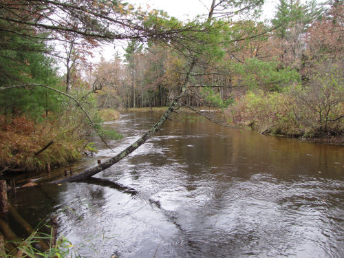 South Branch Pere Marquette River