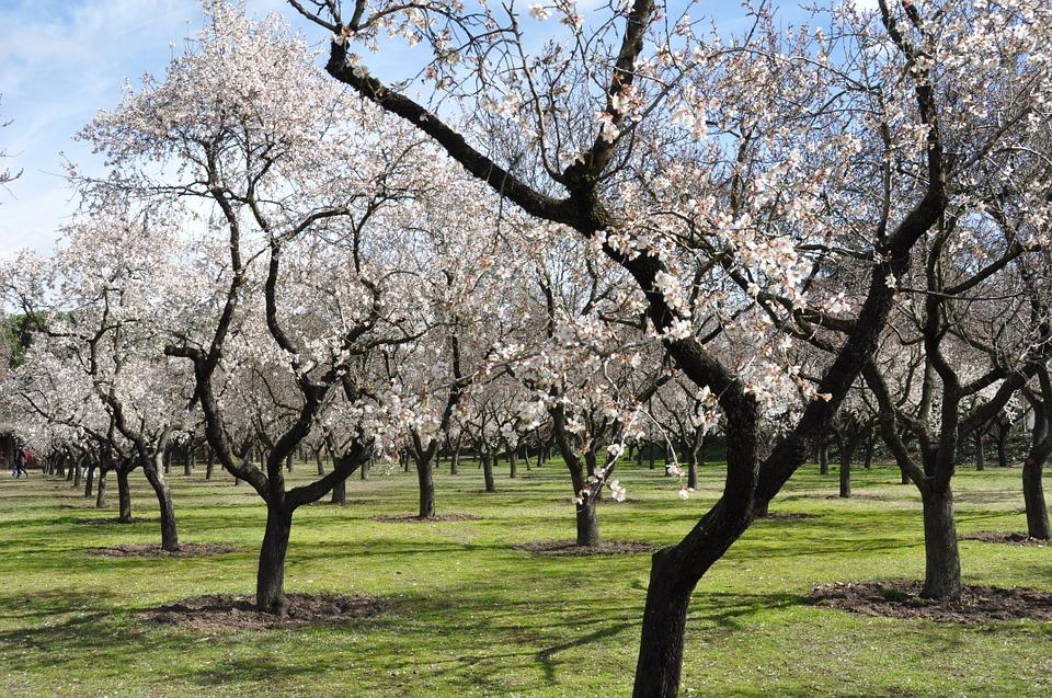 10 rboles frutales para el jard n amigos de la jardiner a for Arboles frutales para jardin