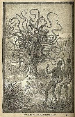Pohon Ya-Te-Veo - weberita.com