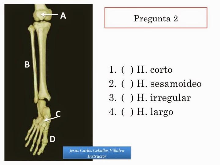 Contemporáneo Anatomía Consejos Prácticos De Examen Embellecimiento ...