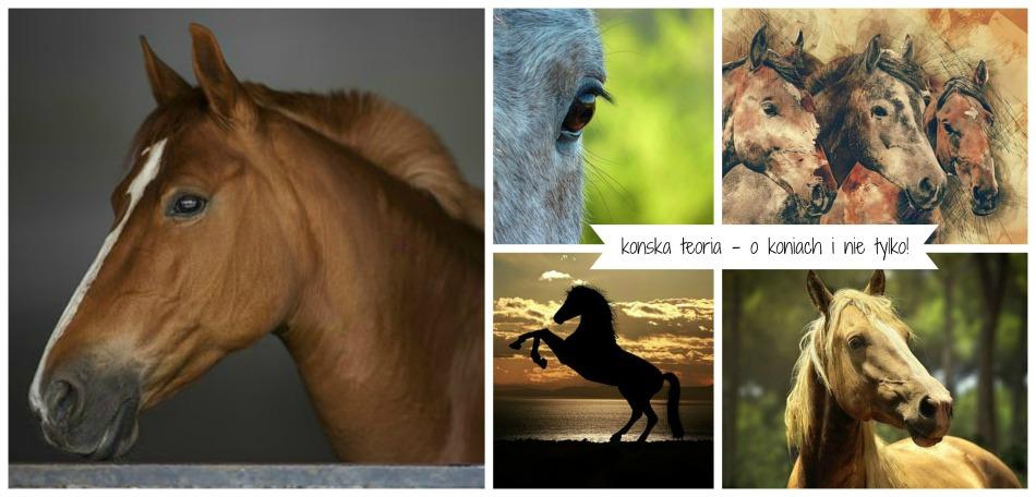 konie, jeździectwo i inne sprawy
