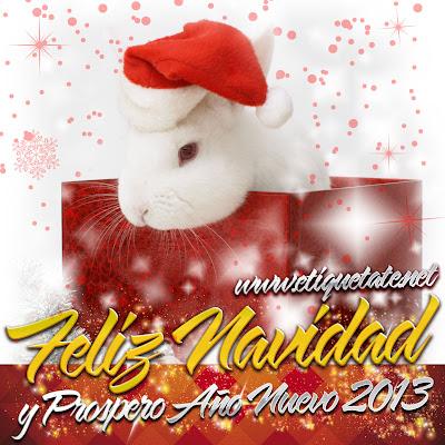 Fotografías muy bonitas de Conejitos Navideños para Facebook