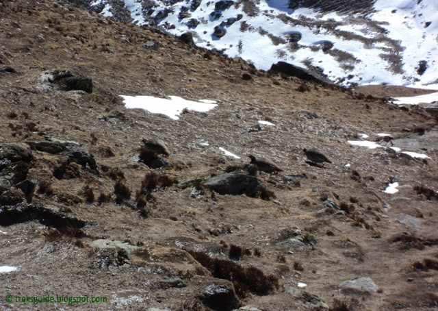 Birds near by Gokyo