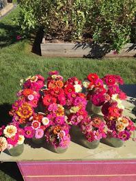 Latest Zinnia Donation of 19 bouquets