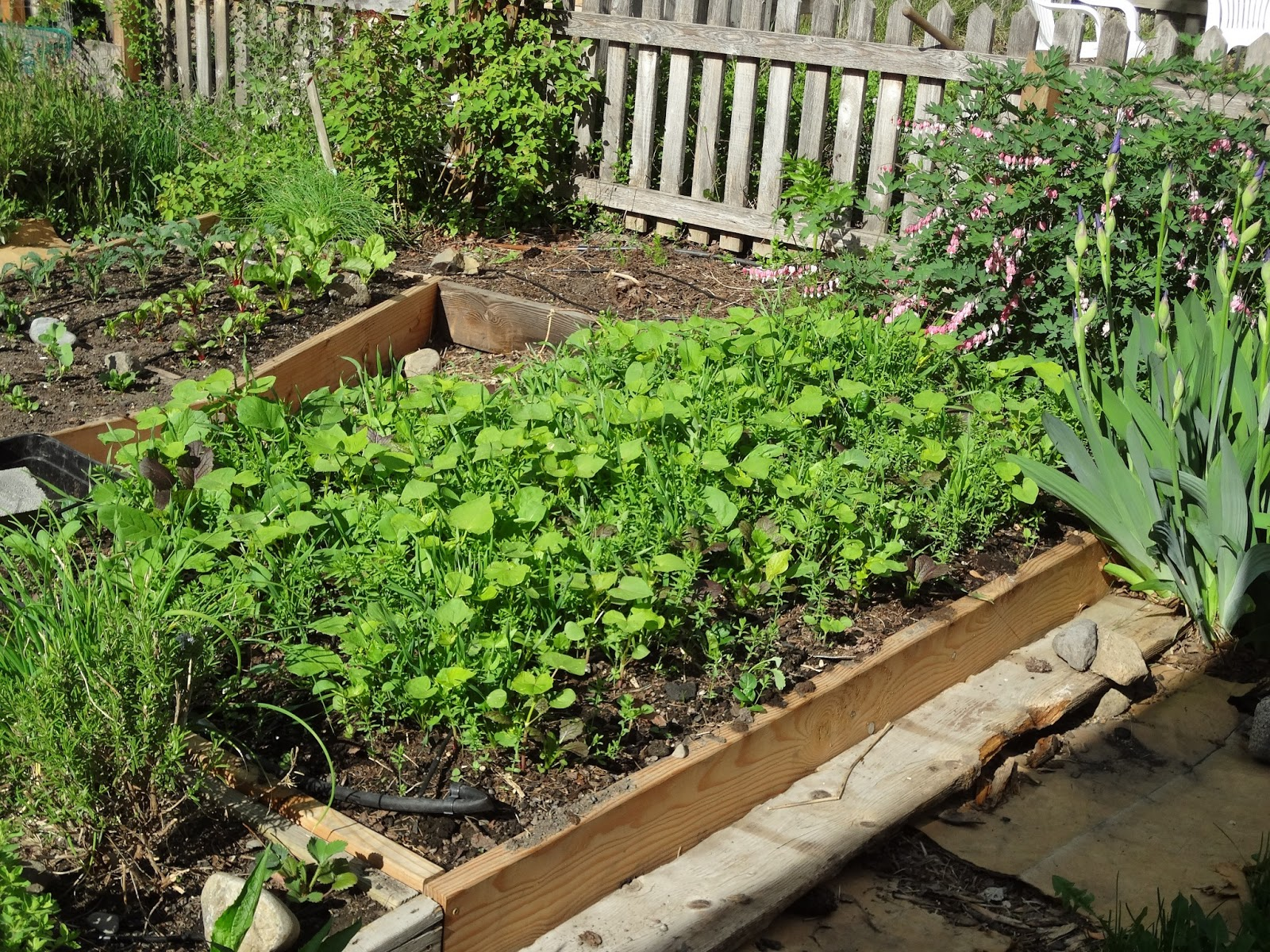 Life in old spokane raised bed cover crop Raised garden bed covers