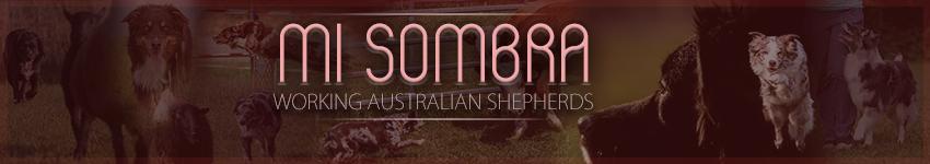 Mi Sombra Australian Shepherd
