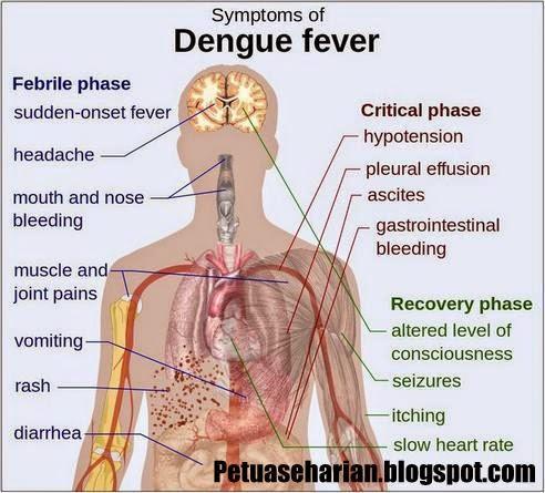 How To Fight Dengue Fever