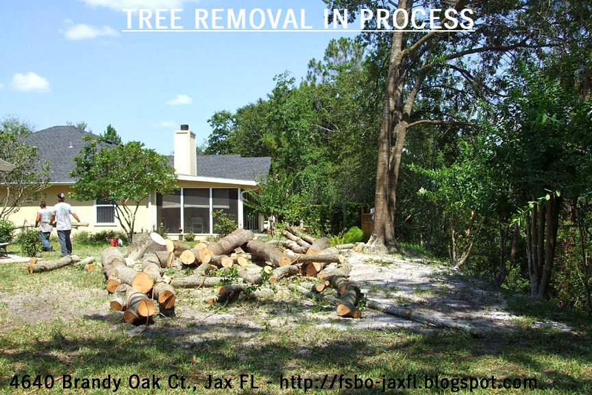4640 Brandy Oak Court - Water Oak Trees Removal in Process
