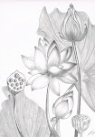 """Lotus Garden"""