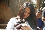 Anushka with Puppy at Blue Cross Pet Carnival Press meet-thumbnail-1