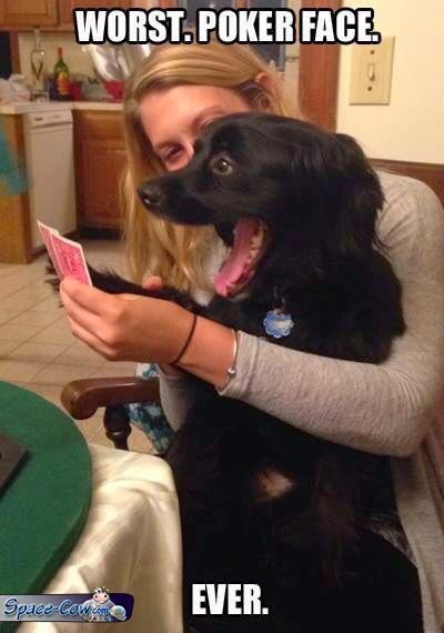 funny poker face dog
