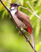 cara berternak burung