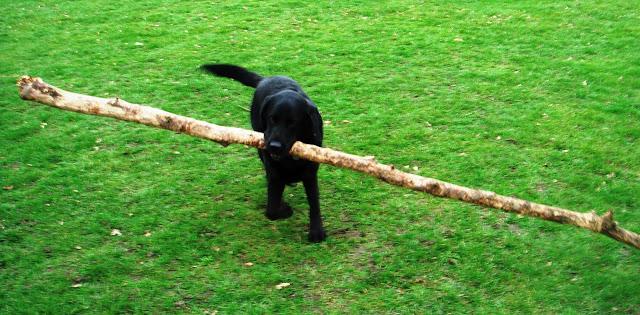 Leo 'The Log Dog'