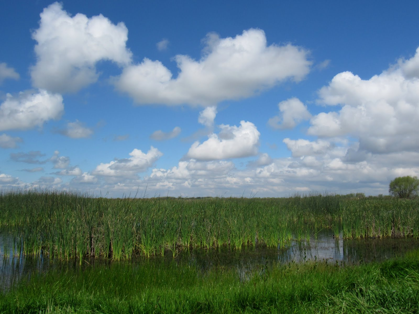 Ode To The Wetland: More Than Just A Marsh