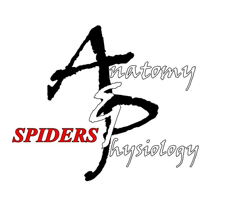 World of Arachnids : Anatomy and Physiology of Spiders
