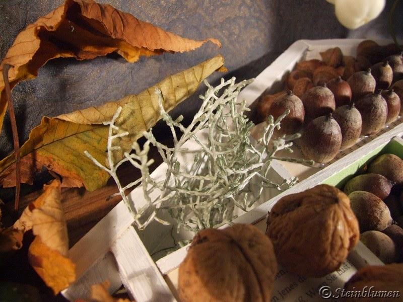 Herbstdeko Stacheldrahtpflanze