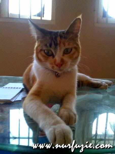 Cara Memilih Makanan Kucing Yang Betul