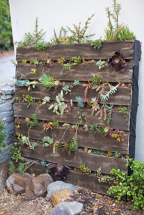 Photo Credit Pictures Of The Pallet Vertical Garden Were Beautifully Taken By The Amazing Katie