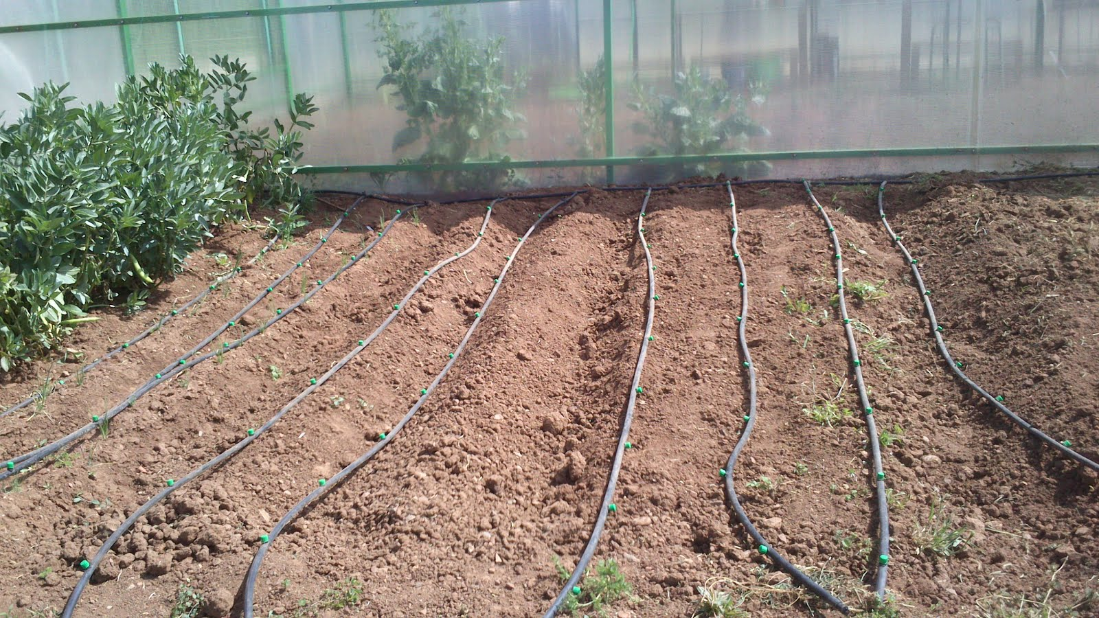 Huerineco instalando el sistema de riego por goteo - Sistema de riego por goteo automatizado ...