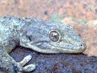Foto original lagartija camara compacta