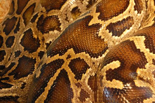 bitten by a snake dream meanings