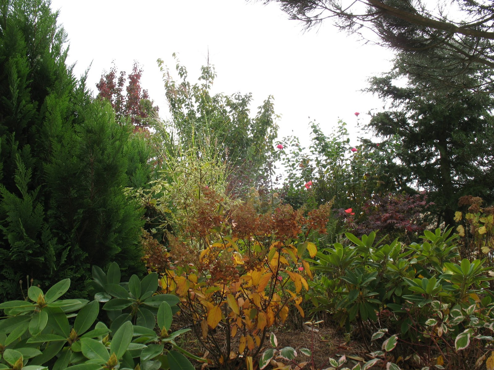 Roses du jardin ch neland le jardin en octobre for Jardin octobre