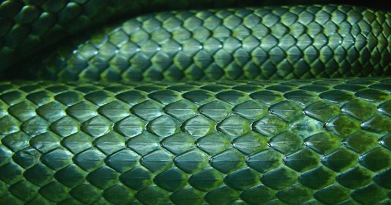 Imagenes Sin Copyright: Textura de piel de serpiente