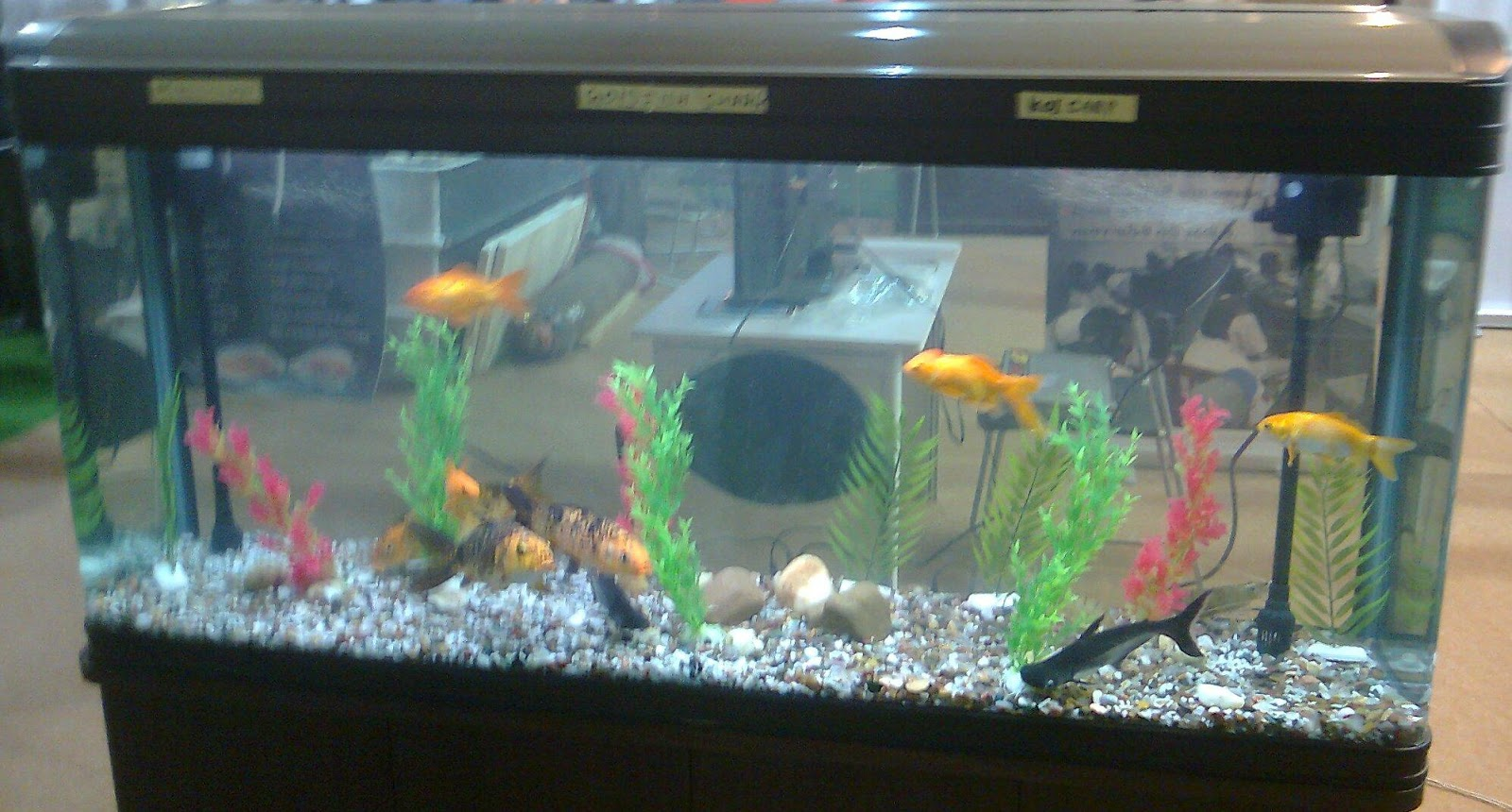 Fish price for aquarium in india - Fish As Pets Pet Shop Ahmedabad Feedage 18234914