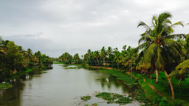 Water canals at alapuzha, kerala - Palms of Kerala