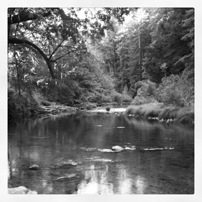 henry cowell park